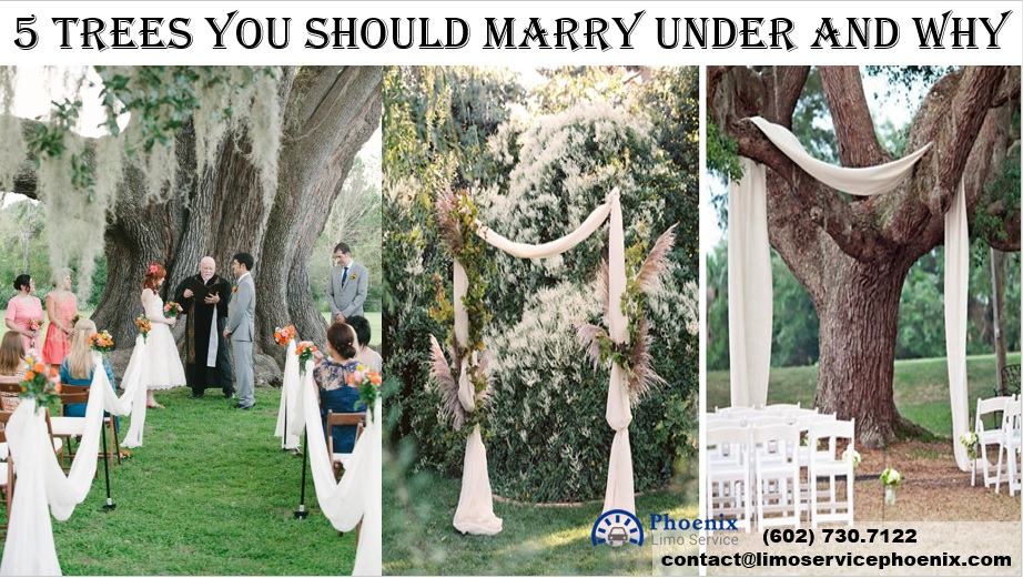 5 Trees You Should Marry Under and Why